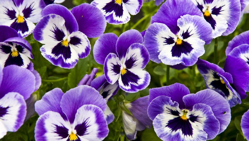 flowers that thrive in winter