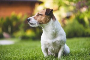 3 Reasons why Dogs Love Artificial Grass