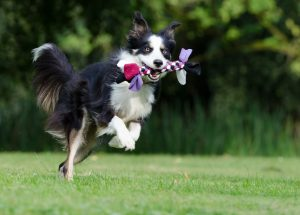 5 Things to Know About Artificial Grass and Pets